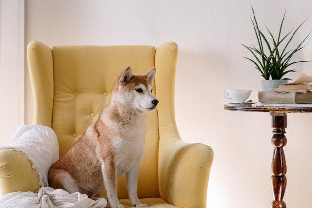 modny fotel