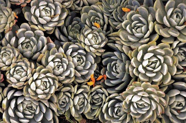 rośliny nie wymagające podlewania